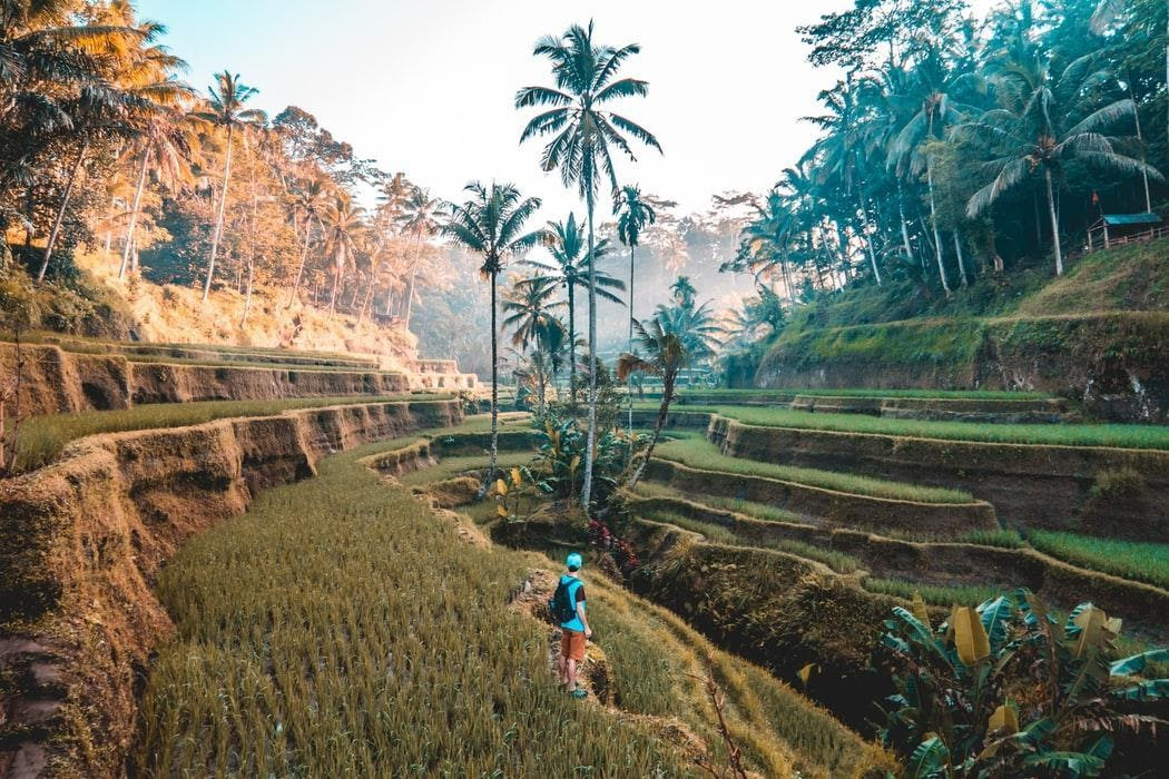 Top hiking and walking trails to discover in Bali in 2020